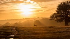 Red deer at dawn. #deer #wildlife #mist #dawn #winter #photography #print #canvas