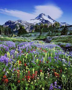 Mt. Jefferson Wilderness Area