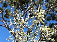 Spring in Oztralia