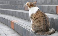 Co grozi kotu wychodzącemu?