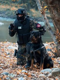 Rottweiler - 5 Military Dogs Who Deserve To Be Honored For Veterans Day Military Working Dogs, Military Dogs, Police Dogs, German Rottweiler, Rottweiler Puppies, German Dog Breeds, War Dogs, Doberman Pinscher, Service Dogs
