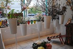 Seis lugares únicos para comprar plantas y flores  Podés elegir llevarte un ramo entero o por varillas.  /Cecilia Wall