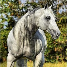 Handsome athletic horse with a cool colored mane.