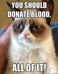 oh grumpy cat you