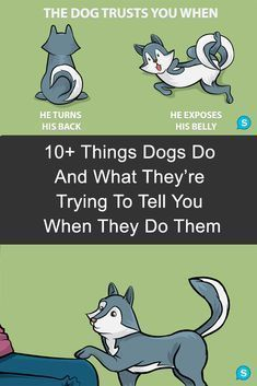 If you've ever wondered what it means when your dog does these things - here's your answer.