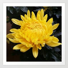 YELLOW 'MUM Art Print by Annie Koh - $17.68