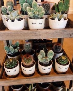 I love cactus n this setup! - I love cactus n this setup! Informationen zu I love cactus n this setup! Succulent Pots, Planting Succulents, Planting Flowers, Planter Pots, Succulent Display, Planter Ideas, Garden Bedroom, Bedroom Plants, Cactus Bedroom