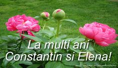 Free entertainment and learning videos - Clip Ready La Multi Ani Constantin, Happy Name Day, Happy