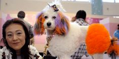 Thirty dogs took their owners to the dog clothes fashion show that took place in Tokyo last month