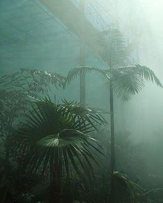 Botánica  #tropical #mystical #botanicalgardens