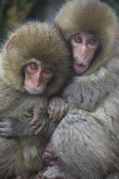 Hugging with each other by Masashi Mochida - Photo 103562595 - 500px Snow Monkey, Ape Monkey, Japanese Macaque, Animal Hugs, Majestic Animals, Orangutan, Primates, Chinese Art, Nature Pictures