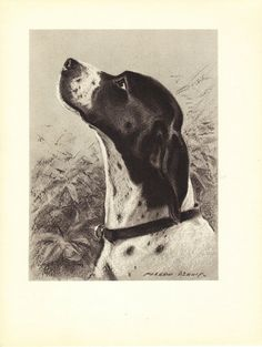 "Pointer Dog Art Print Dennis /""N/"" M"