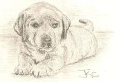 Photobucket Puppies, Dogs, Animals, Art, Art Background, Cubs, Animales, Animaux, Pet Dogs