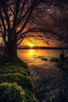 Sunset framed by a beautiful old tree