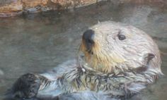 Sea otters can get the flu, too: Human H1N1 pandemic virus infected Washington State sea otters