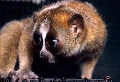 Bildergebnis für what are the cute animals that live in the emergent layer of the rainforest