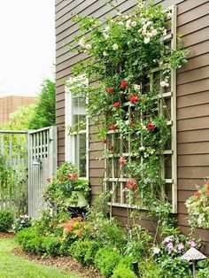 Trellis for the house, Beautiful red flowers