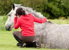 10 Emergency Care Resources on TheHorse.com