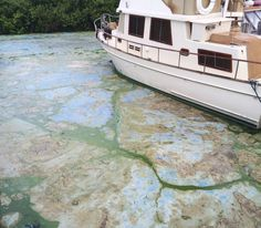 Climate Denier Marco Rubio Tries To Tackle Toxic Florida Algae, Is Baffled By Cause  @retweetngro