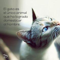 Frases de gatos - ExpertoAnimal