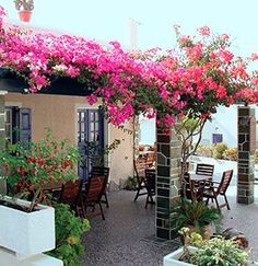 Image result for bougainvillea los angeles fence