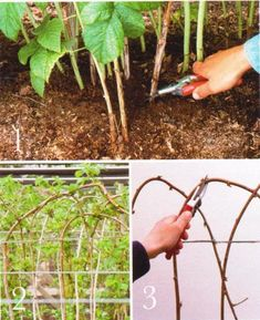 Pruning Fruit Trees, Growing Plants, Garden Hose, Garden Design, Home And Garden, Outdoor, Agriculture, Growing Up, Plant