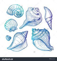 Vector Set Sea Shell Isolated On Stock Vector (Royalty Free) 209664829 Seashell Painting, Seashell Art, Drawing Sketches, Art Drawings, Shell Drawing, Seashell Tattoos, Sea Tattoo, Sea Life Tattoos, Sea Life Art