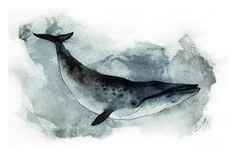 DUFFBOT: Blue Whales