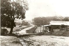 Bulli 1890's