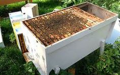 A Dartington Long Deep Hive. Interesting.