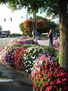 We like our flowers in our little town. Fairhope Alabama.