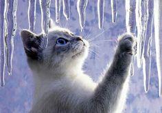 Snow lovely cat(=`ェ´=)