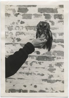 "found, anonymous photograph  Typewritten on the verso: ""Little Owl, Mae Holding Him. 1939.""  Found in Ohio."