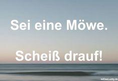 Sei eine Möwe. Scheiß drauf! ... gefunden auf https://www.istdaslustig.de/spruch/4725 #lustig #sprüche #fun #spass