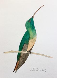 Original Watercolor Paintings by christianedobbins Watercolors, Watercolor Paintings, Hummingbird Moth, Humming Birds, South Texas, Gulf Of Mexico, Florida Keys, Bird Art, Lab