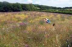 wildflower seeds, wildflower seed mixtures & wild flower plug plants | Wild Flower Lawns & Meadows