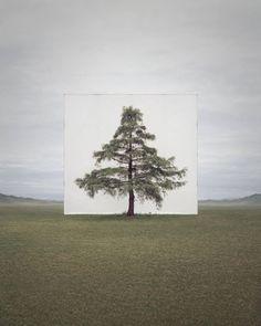 Real Trees on Canvas Background – Fubiz Media
