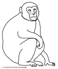 Monkey Pictures And Coloring Pages Rhesus