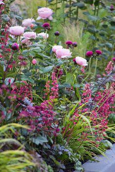 Rose, Heuchera, Cirsium heterophyllum, Cimicifuga atropurpurea, Paeonia, Millium effusum Aureum?