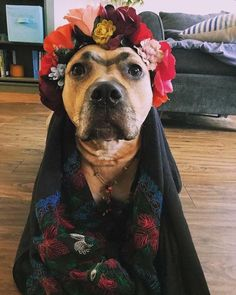 Tequila Ranc dressed as Frida Kahlo for Halloween. Frida E Diego, Frida Art, Dog Halloween, Cool Halloween Costumes, Love Dogs, Puppy Love, Best Costume Ever, Pet Dogs, Dog Cat
