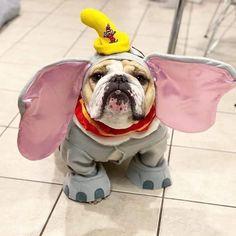 Trick or treat. Bulldog dogs and puppies Bulldog Puppies, Cute Puppies, Cute Dogs, Dogs And Puppies, Doggies, Cute Baby Animals, Funny Animals, Cute Bulldogs, British Bulldog