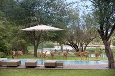 Tanda Tula Safari Camp - Pool