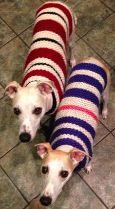 2 warm and cozy whippets in their sweaters by couchpotatoknits.etsy.com