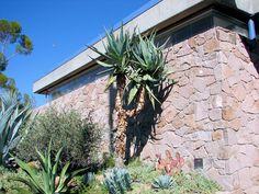 Cape Aloe, Aloe ferox