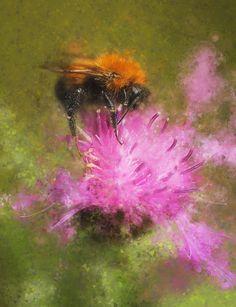 bumblebee by Viacheslav Krasnoperov on 500px