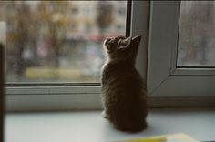Kitty on film.