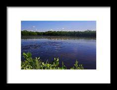 sanibel, island, florida, ding darling preserve, water, nature, landscape, michiale schneider photography, interior design, framed art, wall art