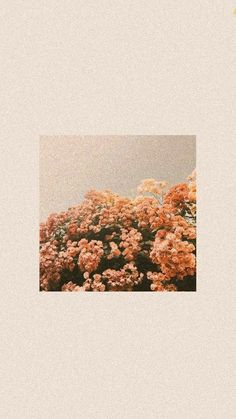Hintergrund ideen Sau ny ti mi bit, bng hoa khng phi ca ti. Chng qua l ti i ngang qua vo ng ma hoa n p nhtquot; Pastel Iphone Wallpaper, Soft Wallpaper, Iphone Background Wallpaper, Aesthetic Pastel Wallpaper, Retro Wallpaper, Aesthetic Backgrounds, Tumblr Wallpaper, Disney Wallpaper, Aesthetic Wallpapers