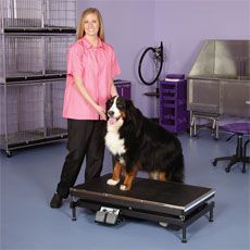 """Master Equipment Electric Easy Lift Grooming Table   41"""" x 24""""   200lb"""