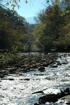Gatlinburg, Tennessee - Pure peacefulness to stand by a meandering mountain stream.